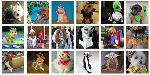 costumi per cani e gatti
