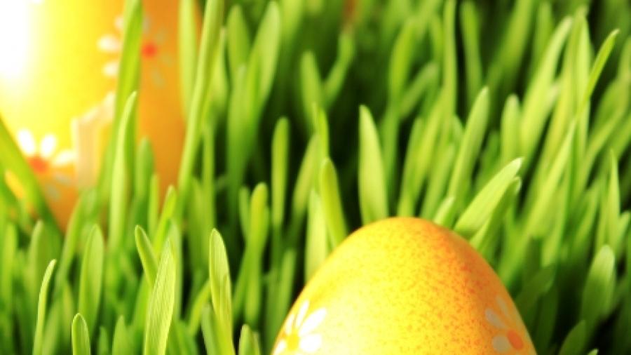 decorazione pasqua - uovo con germogli di grano