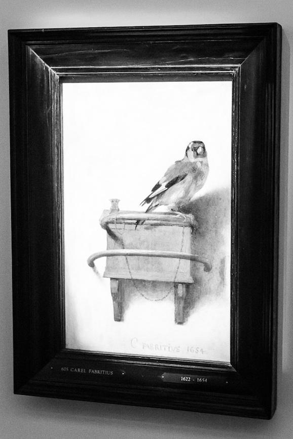 Carel Fabritius Il cardellino, 1654 olio su tavola, cm 33,5 x 22,8 acquisito nel 1896 (Inv. n. 605)