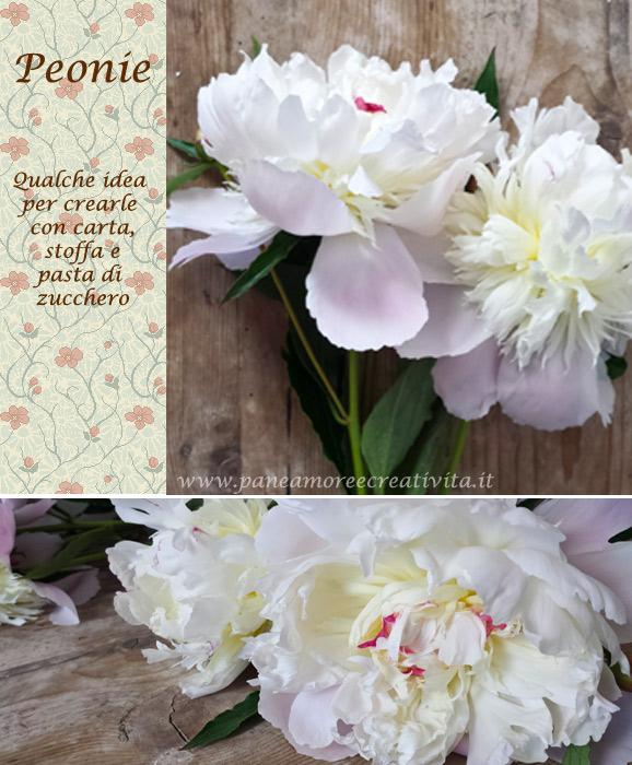 peonie-blog