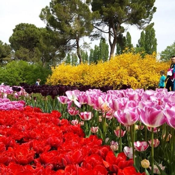 Parco Sigurtà (Verona)