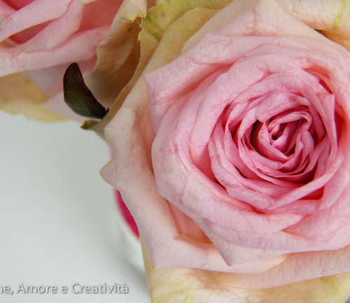 Pot – pourri con le rose