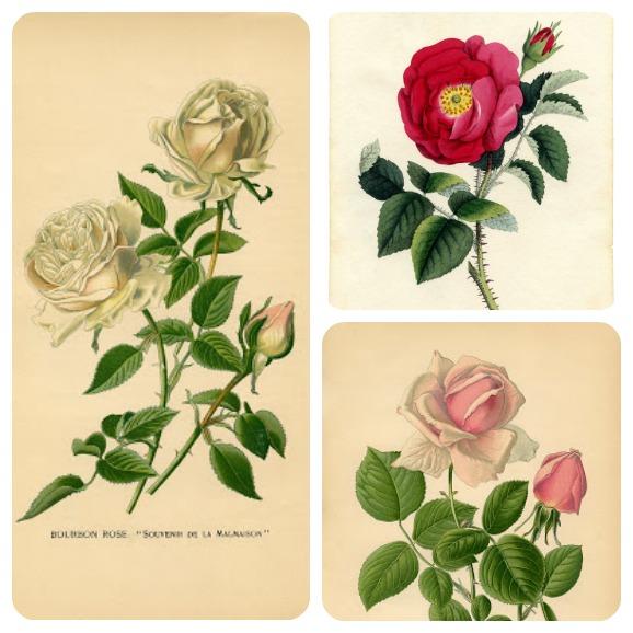rose vintage da stampare.jpg