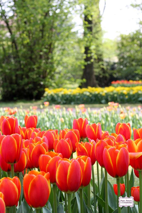 tulipani_gialli_e_rossi_parco_sigurta