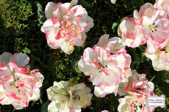 tulipani_rosa_parco_sigurta