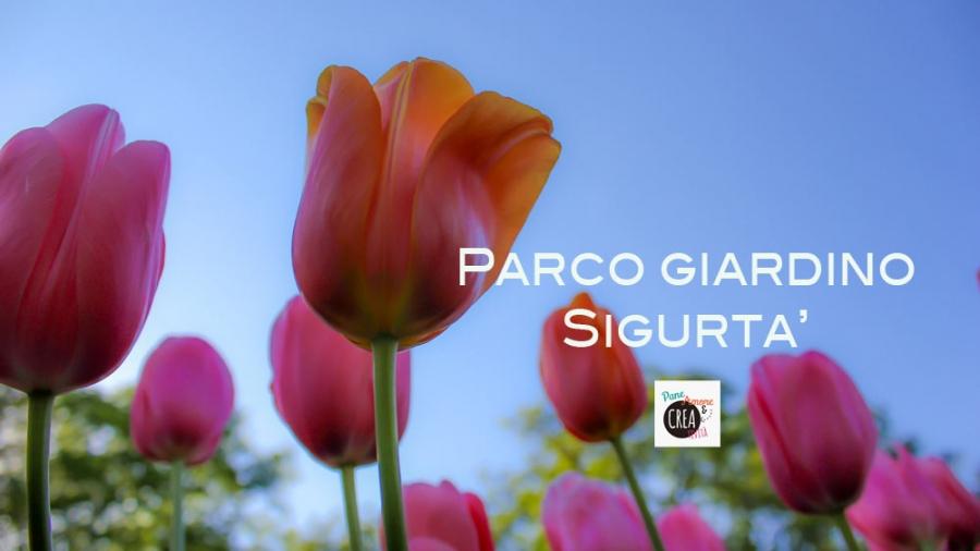 tulipani-sigurta-2016-web