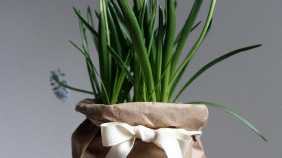 700_muscari-in-bag-presentation
