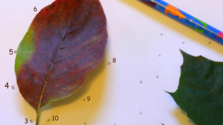 giochi con le foglie
